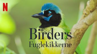 Birders: Fuglekikkerne (2019)