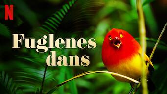Fuglenes dans (2019)